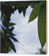 Single Mango Leaf Silhouetted Against The Sky Wood Print