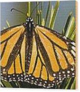 Single Monarch Butterfly Wood Print