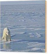 Single Polar Bear Wood Print