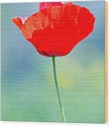 Single Poppy Wood Print