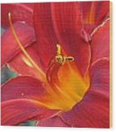 Single Red Lily 2 Wood Print