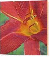 Single Red Lily Closeup Wood Print
