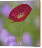 Single Red Poppy  Wood Print