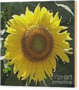 Single Sunflower Wood Print