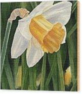 Single Yellow Daffodil Wood Print