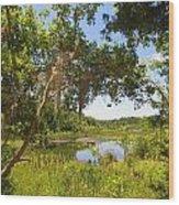 Sink Hole Lake Wood Print