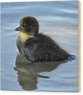 Sitting Duckling Wood Print