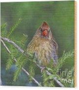 Sitting In The Cedar Wood Print