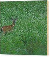 Six Point Deer In Wildflowers Wood Print