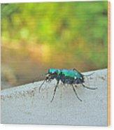 Six-spotted Tiger Beetle - Cicindela Sexguttata Wood Print