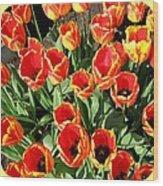 Skagit Valley Tulips 10 Wood Print