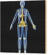 Skeleton And Ligaments, Artwork Wood Print