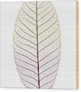 Skeleton Leaf Wood Print by Elena Elisseeva