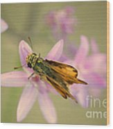 Skipper Butterfly Wood Print