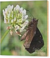Skipper On Clover Square Wood Print