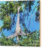 Puget Sound Great Blue Heron Skirt Wings Wood Print