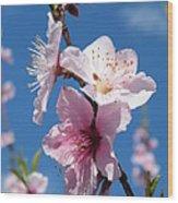 Sky High Cherry Blossoms Wood Print