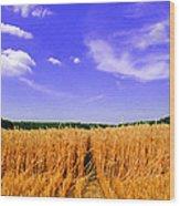Sky Over The Field 3 Ae  Wood Print