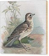 Skylark, Historical Artwork Wood Print