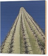Skyward View Of A Saguaro Cactus Wood Print
