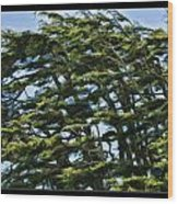 Slanted Branches Wood Print