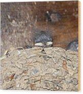 Sleeping Barn Swallows Wood Print