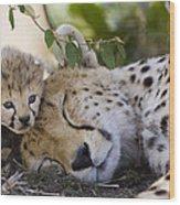 Sleeping Cheetah And Cub Kenya Wood Print