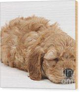 Sleeping Cockerpoo Puppy Wood Print