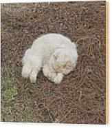 Sleeping Ivory The Cat Wood Print