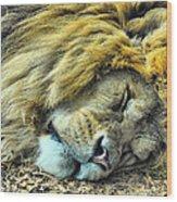 Sleeping Lion Wood Print