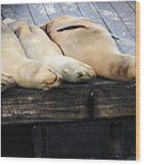 Sleeping Lions Wood Print