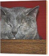 Sleeping Pixie Wood Print