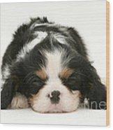 Sleeping Puppy Wood Print by Jane Burton