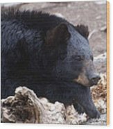 Sleepy Black Bear Wood Print