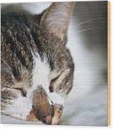 Sleepy Cat Wood Print