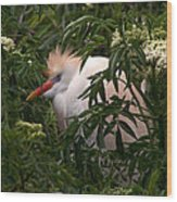 Sleepy Egret In Elderberry Wood Print