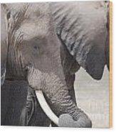 Sleepy Elephants Wood Print