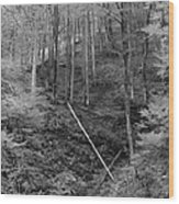 Slovenian Forest In Black And White Wood Print