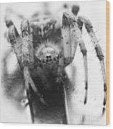 Small Alberta Spider Wood Print