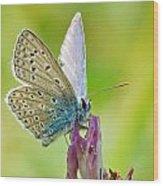 Little Butterfly Wood Print