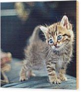 Small Cute Kitten Wood Print