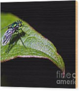 Small Green Fly 2 Wood Print