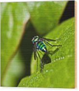 Small Green Fly Wood Print