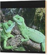 Small Iguanas Stirnlappenba Wood Print
