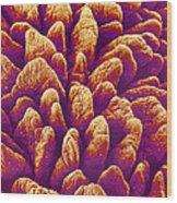 Small Intestine Villi, Sem Wood Print