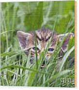 Small Kitten In The Grass Wood Print