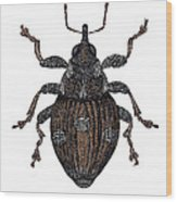 Small Nettle Weevil Wood Print