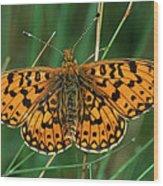 Small Pearl-bordered Fritillary Wood Print