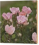 Small Pink Roses In Garden Wood Print by M K  Miller