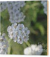 Small White Wildflowers  Wood Print